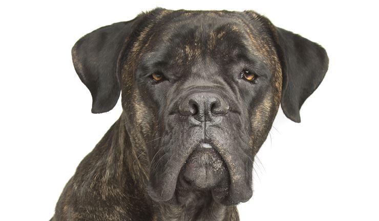 Dog Breed Ears