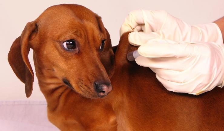 Licgnl Diabetes Mellitus Suikerziekte Bij De Hond