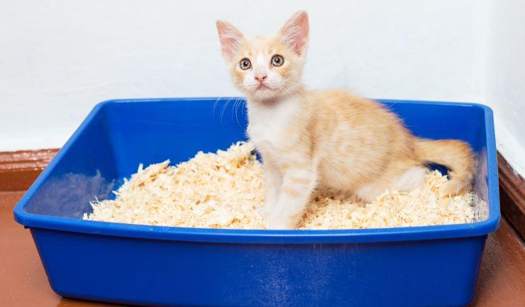Bekend licg.nl - Verzorging van uw kitten AZ48