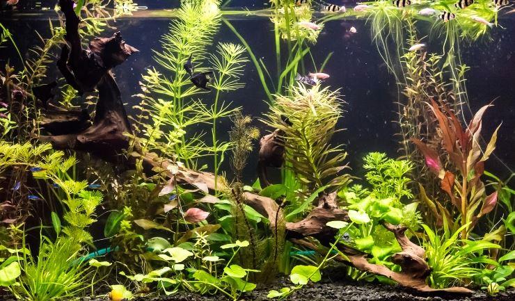 Aquarium Ideeen Inrichting.Licg Nl Het Tropisch Zoetwateraquarium