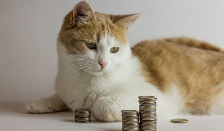 Wat kost een huisdier for Wat kost een rol behang