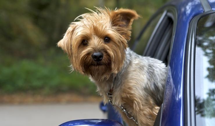 Afbeeldingsresultaat voor huisdieren